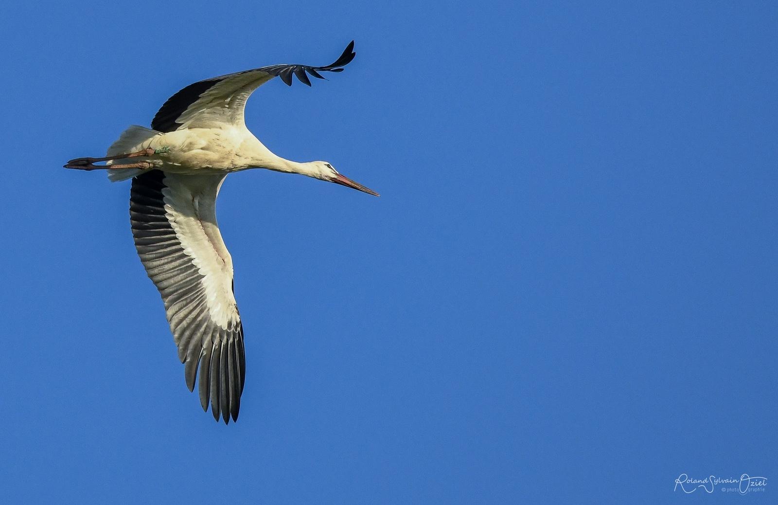 Gite avec observation des oiseaux en Vendée