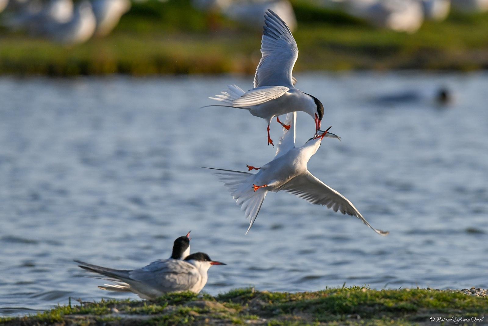 Gite pour observer les oiseaux en Vendée